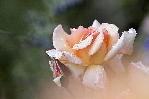 Heiko Koehrer-Wagner - Pink Rose