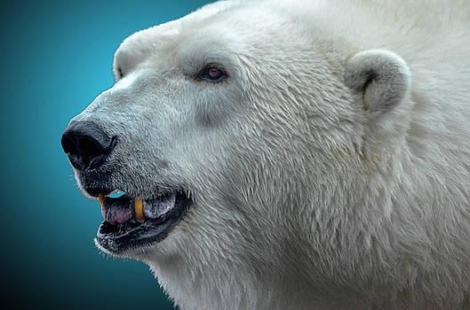 Polar Bear 2 by Brian Stevens