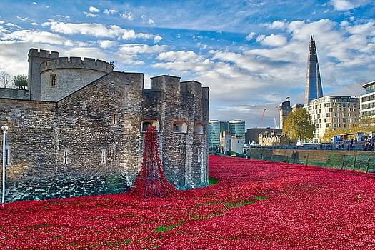 Poppies at the Tower of London by Chris Day