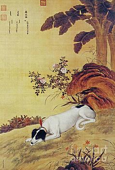 Prized Dog Chinese Greyhound. by Giuseppe Castiglione