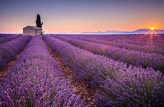 Provence by Stefano Termanini