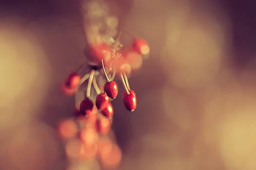 Red berries by Cindy Grundsten