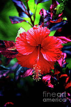 Red Hibiscus 2 by Inspirational Photo Creations Audrey Taylor
