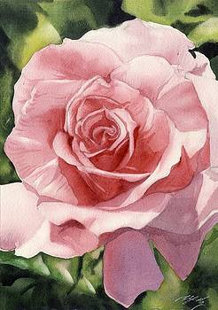 Alfred Ng - rose in pink