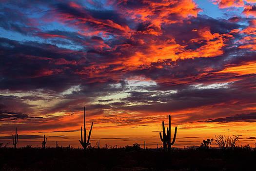 Saguaro Silhouette Sunset by Saija Lehtonen