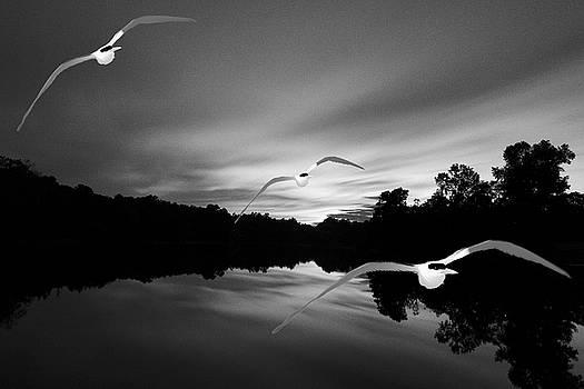 Seagull Flying In Action by Fernando Cruz