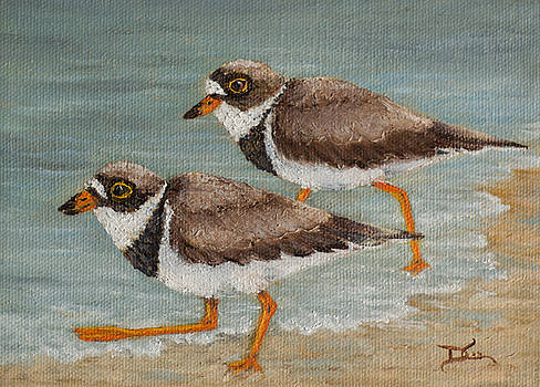 Dee Carpenter - Semipalmated Plover