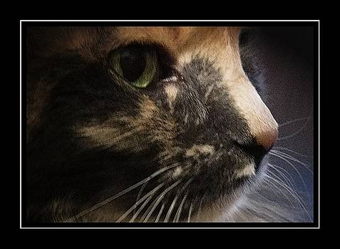 Shelby by Lenore Senior