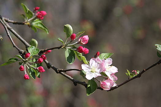 Blossom and Hope by Vadim Levin