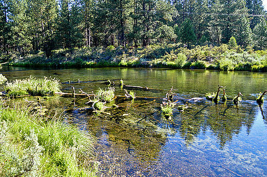 Spring Creek Near Chiloquin, Oregon by David Crockett