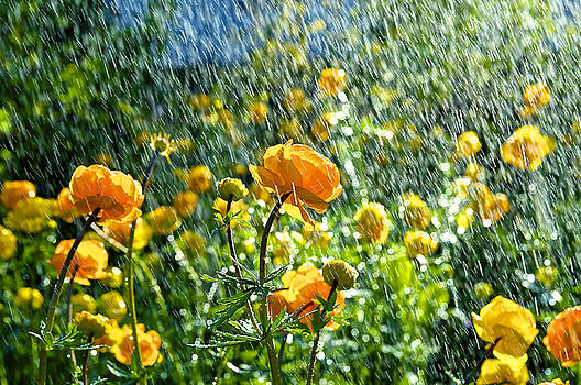 Spring Flowers In The Rain by Tamara Sushko