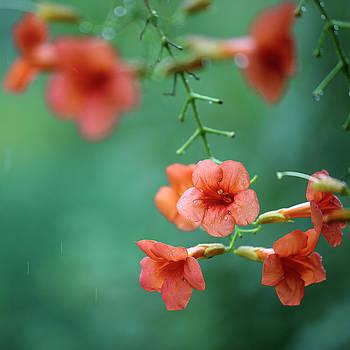 Summer Flowers by Nailia Schwarz