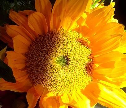 Sunflower by Donna Spadola