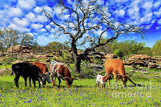 Texas Hill Country by Raul Rodriguez