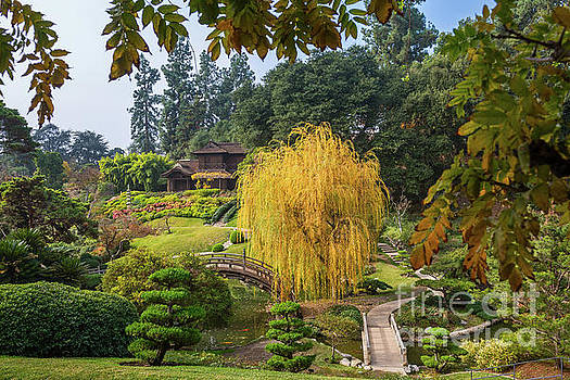 The beautiful fall colors of the Japanese Gardens in the Hunting by Jamie Pham