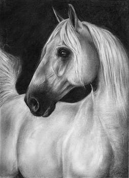 The beauty of Silence by Paula Collewijn -  The Art of Horses