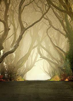 The Dark Hedges by Pawel Klarecki