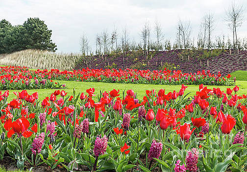the keukenhof in Lisse by Compuinfoto