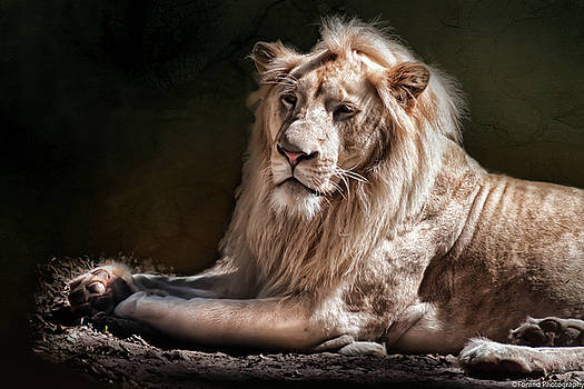 The King by Debra Forand