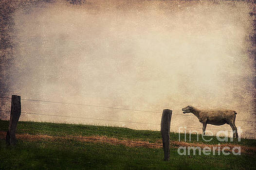Angela Doelling AD DESIGN Photo and PhotoArt - The sheep