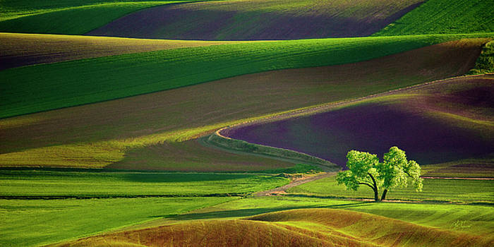 Tree in the Palouse - Panoramic by Lori Grimmett