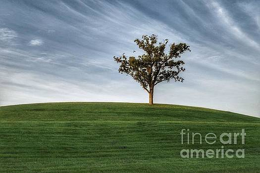 Tree by Lisa Plymell