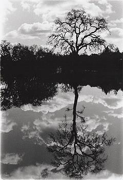 Erik Paul - Tree Reflection Sebastopol Ca,