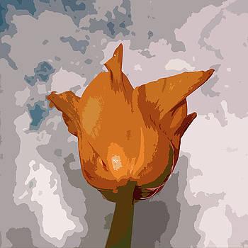 James Hill - Tulip