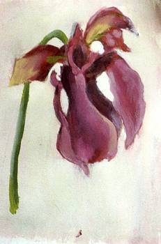 Tulip by Thomas Armstrong