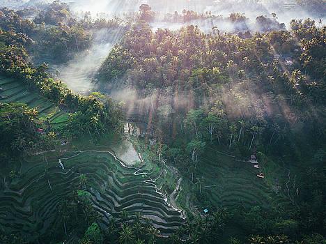 Ubud Rice Terrace by Evgeny Vasenev