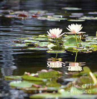 Water Lilies  by Ruth Housley