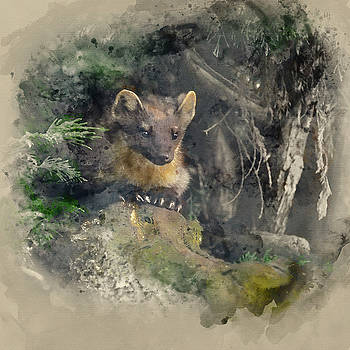 Watercolor painting of Stunning pine martin martes martes on bra by Matthew Gibson