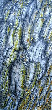 Weeping Willow Bark by Elizabeth H Tudor