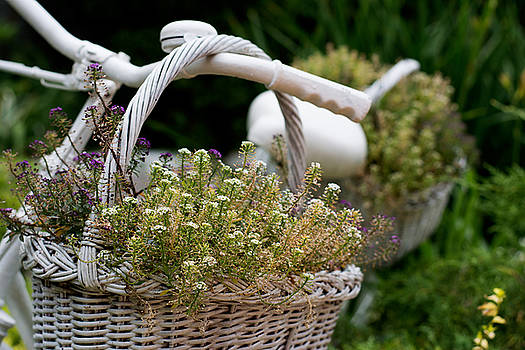 Newnow Photography By Vera Cepic - White basket with flowers hanging on old bicycle in garden