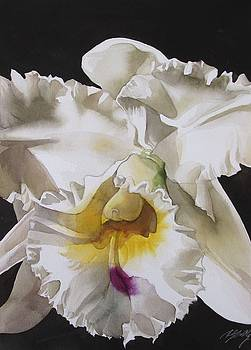 White Cattleya Orchid by Alfred Ng