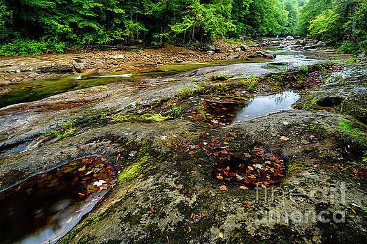 Williams River in the Rain by Thomas R Fletcher