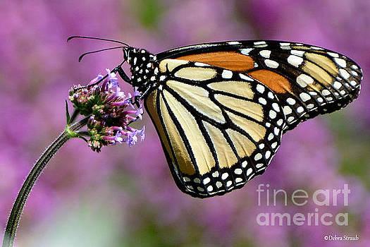 Wings of Glory by Debra Straub