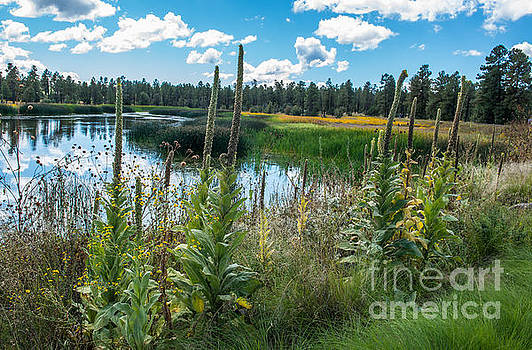 Woodland Lake Park Pinetop Arizona by Michael Moriarty