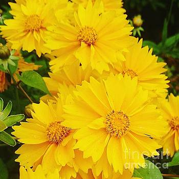 Yellow flowers  by Sobajan Tellfortunes