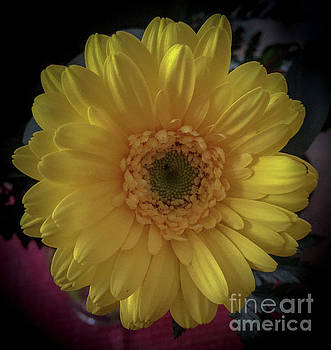 Yellow by Joseph Yarbrough