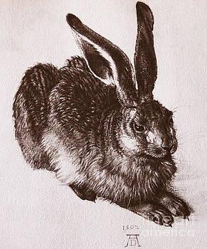 Albrecht Durer - Young Hare