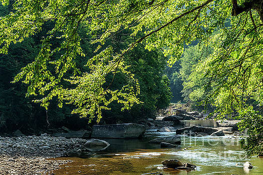 Williams River Summer by Thomas R Fletcher