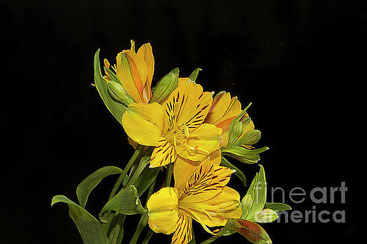Yellow Flowers by Elvira Ladocki