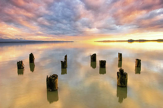 2006 Pilings At Goose Bay by Ron Day