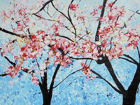 201726 Cherry blossoms by Alyse Radenovic