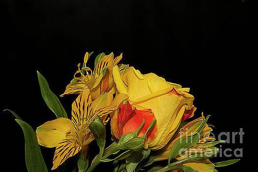 Colorful Flowers by Elvira Ladocki