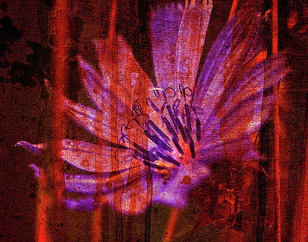 Texture Flowers by Andre Faubert