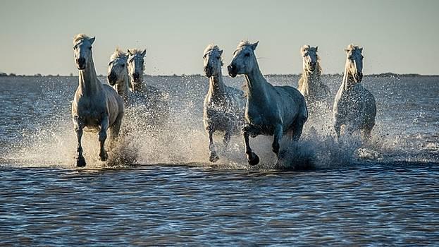Horse by Dorothy Binder
