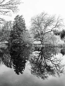 Marilyn Wilson - Two Trees Reflected - bw
