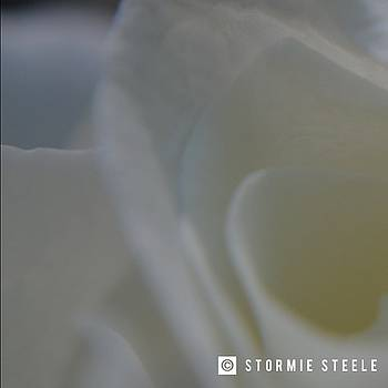 Angels Among Us by Stormie Steele